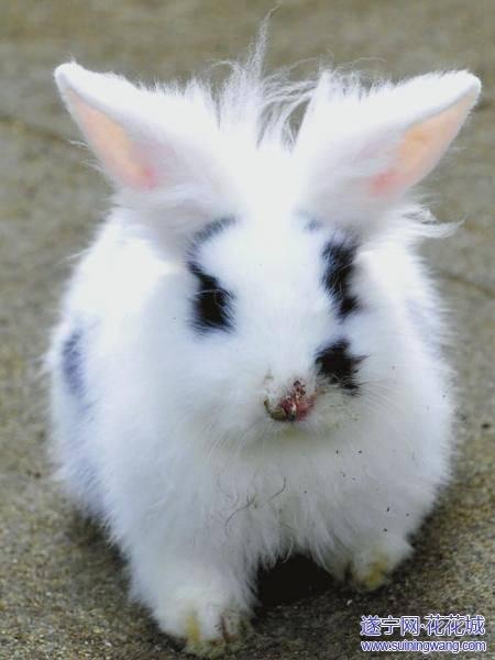 兔子的萝卜爱情 谈天说地图片