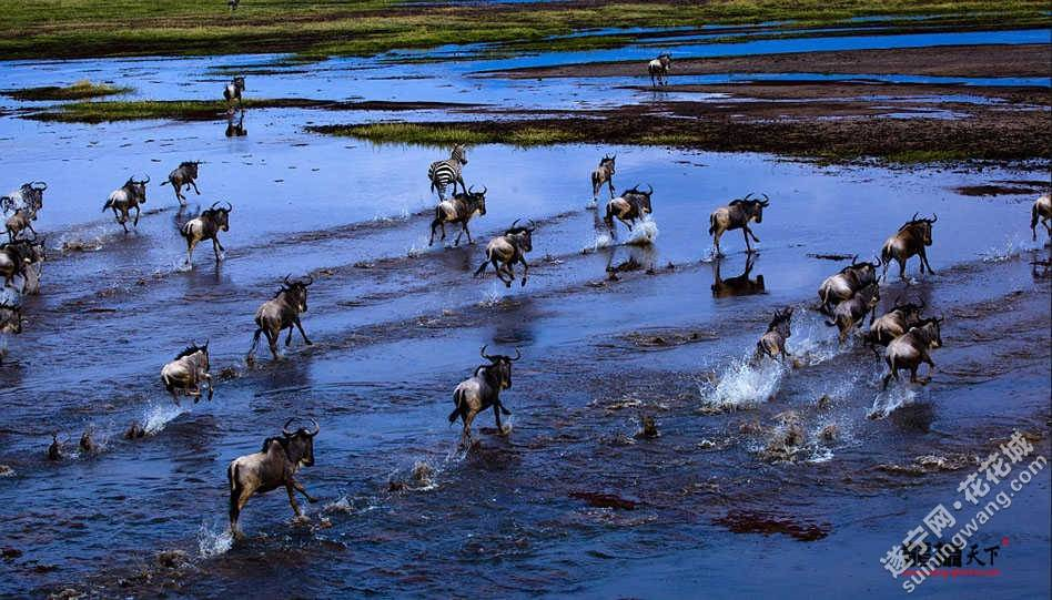寻找动物大迁徙的壮观场面