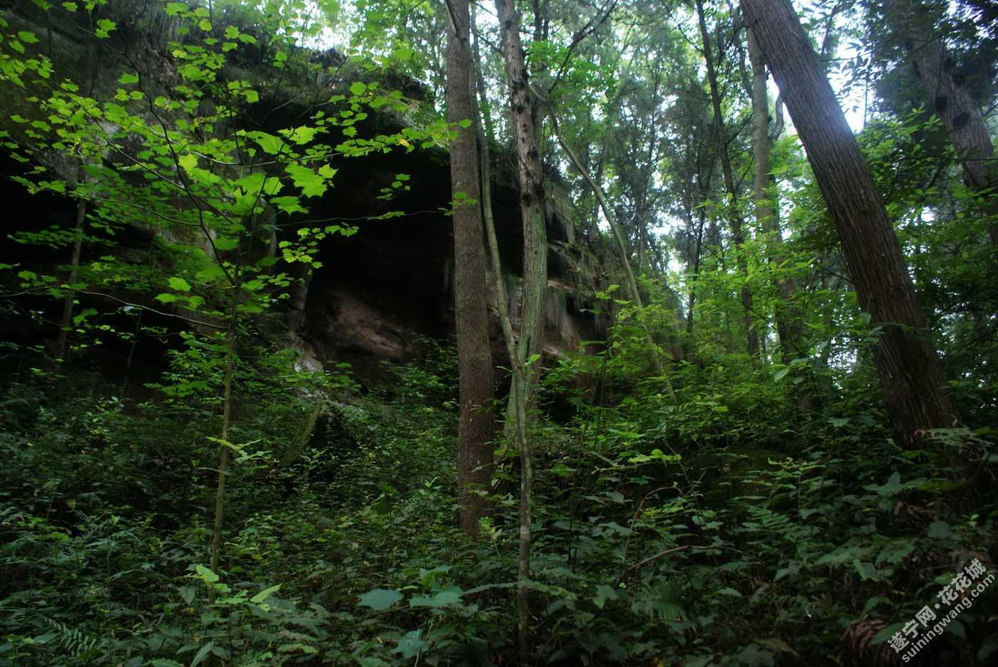 壁纸 风景 森林 桌面 1400_936